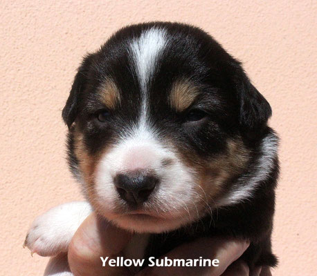 Yellow Submarine      maschio/boy     tricolore        disponibile/available