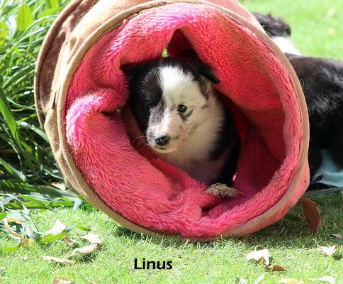 Linus      maschio/boy        biblue             prenotato/reserved
