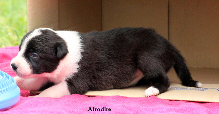 Afrodite   peso / weight:   880 gr.       disponibile/available