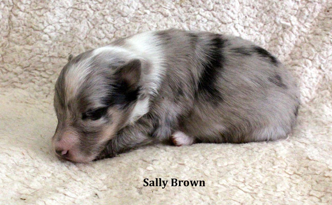 Sally Brown           peso/weight  300 gr.                prenotata/reserved