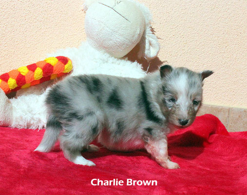 Charlie Brown     peso/weight   650 gr.         prenotato/reserved