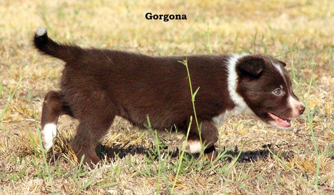 Gorgona      peso/weight   2,2 kg.              prenotata/reserved