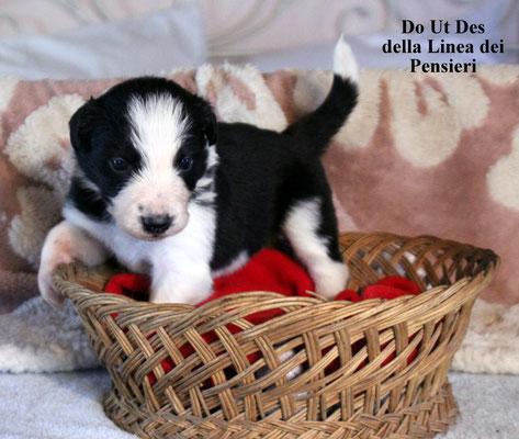 Do Ut Des      maschio/male      bianco e nero/ biblack     disponibile/available
