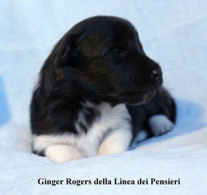 Ginger Rogers      femmina/girl        bianca e nera/biblack   prenotata/reserved