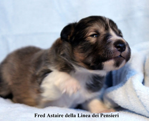 Fred Astaire   maschio/boy       fulvo/ sable              prenotato/ reserved