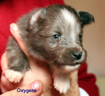 Oxygene    maschio/boy     blue                disponibile/available