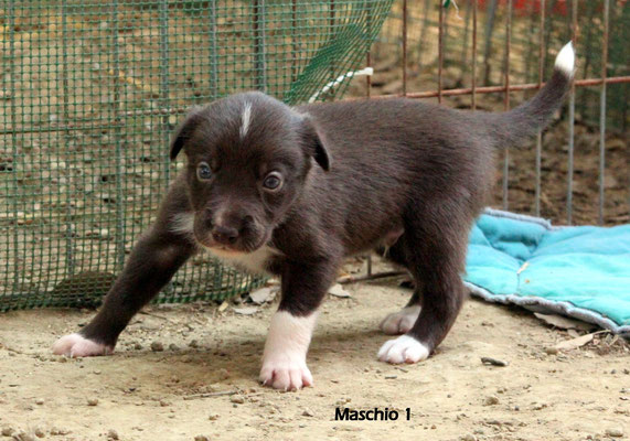 Maschio/boy 1        peso/weight   1,10 kg.             disponibile/available