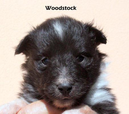 Woodstock      maschio/boy     biblack          prenotato/reserved