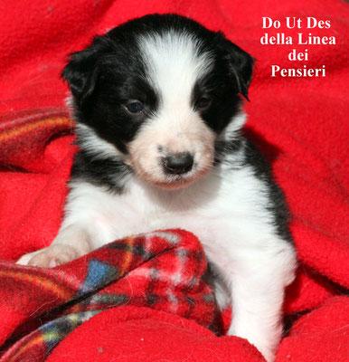 Do Ut Des        maschio/male    bianco nero/biblack      prenotato/reserved