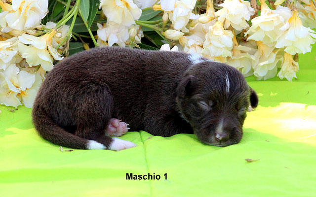 Maschio/boy 1     peso/weight  650 gr.           disponibile/available