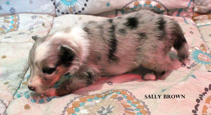 SALLY BROWN      peso/weight 450 gr.      prenotata/reserved