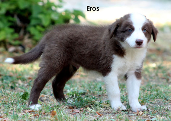 Eros    peso/weight     3,070  kg.            prenotato/reserved