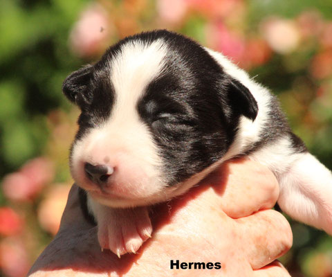 Hermes   maschio/boy   bianco nero/ biblack    disponibile/available