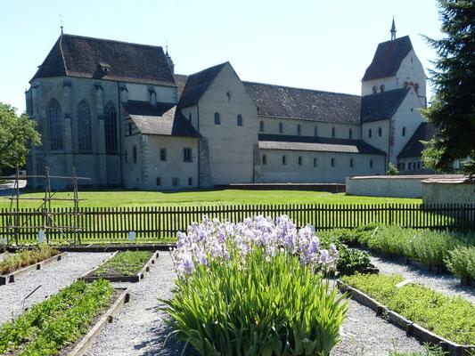 In Strabos Kräutergarten blüht die Schwertlilie (Iris germanica).
