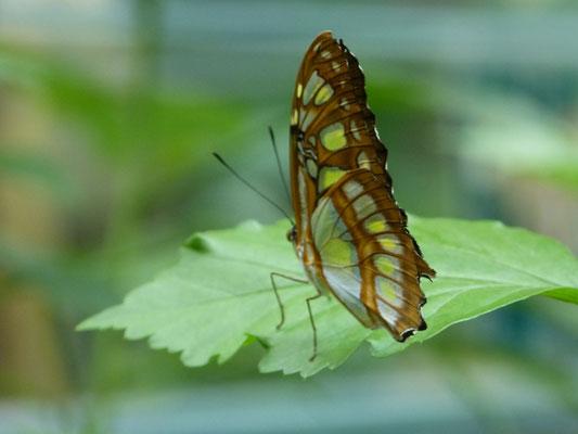 Die Schmetterlingsausstellung läuft noch bis 12.05.19