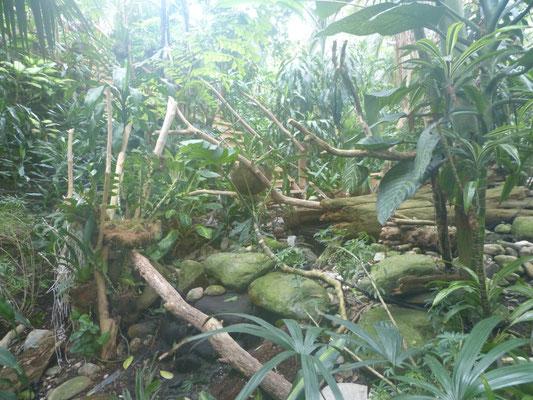 Tropisches Klima in der Biosphäre Potsdam