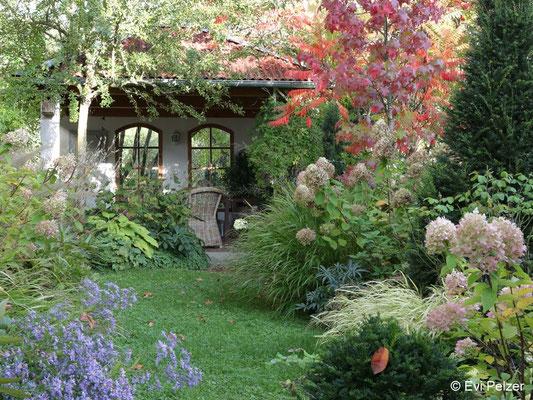 Rispenhortensien im Herbstgarten von Evi Pelzer