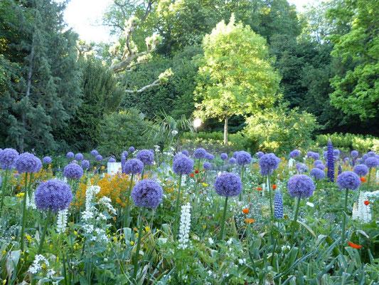 In den Blumenbeeten dominiert der Zierlauch (Allium).
