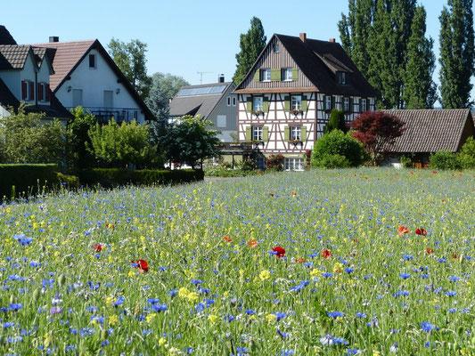 Eine Blumenwiese mitten im Ort.