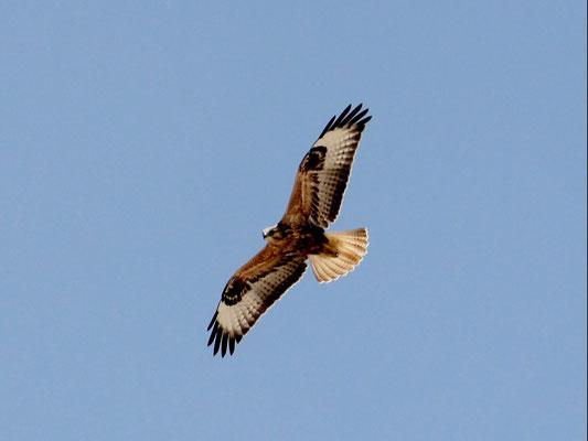 Falke über Obruk