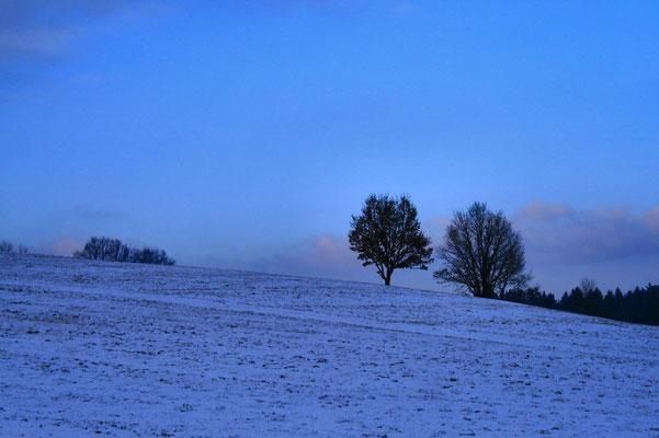 Blaue Stunde- bei Bärndorf