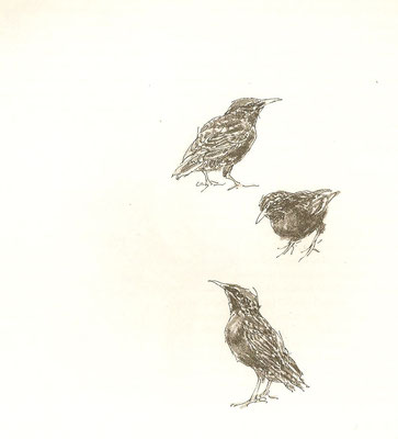 Peter Vos: starlings