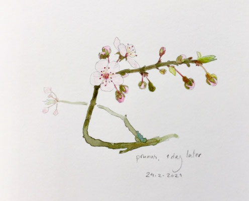 24-2-2021 ; Annette Fienieg: Prunus, 1 dag later