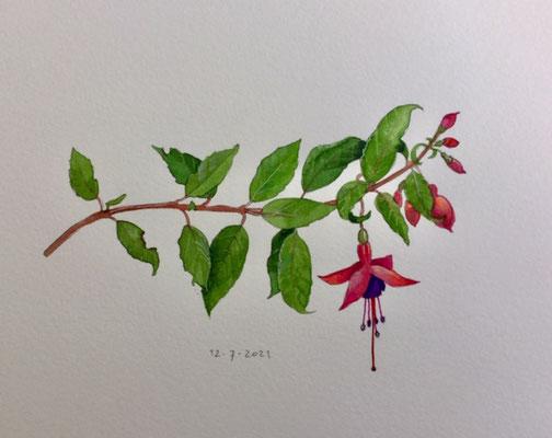 Annette Fienieg: Fuchsia, 12-7-2021