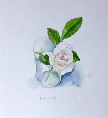 Annette Fienieg: White rose, 8-6-2021