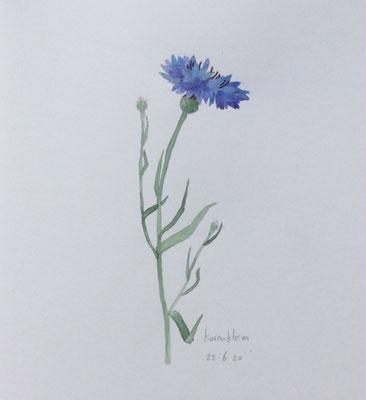 Annette Fienieg: Cornflower