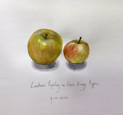 Annette Fienieg: Two apples' Lunterse pippeling and Cox's orange pippin