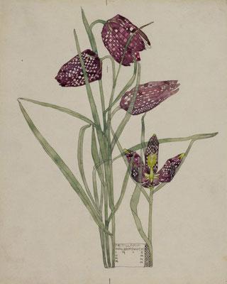 Charles Rennie Macintosh: Fritillaria