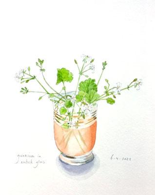 Annette Fienieg; Geranium in an antique glass, 6-4-2021