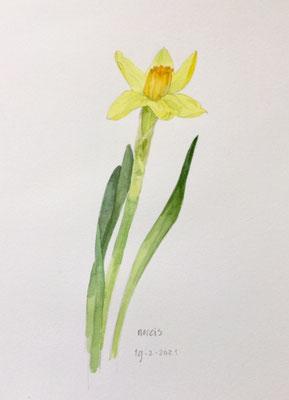19-2-2021 Daffodil, Annette Fienieg