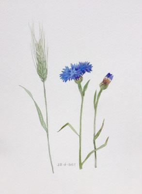 Annette Fienieg: Cornflowers and ear of corn, 28-6-2021