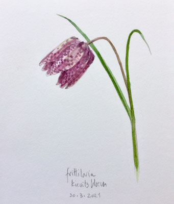 Annette Fienieg: Frittilaria, koekoeksbloem, 30-3-2021