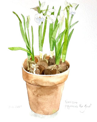 Annette Fienieg; Narcissus, 8-4-2021
