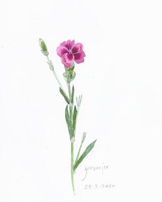 Annette Fienieg: Pink