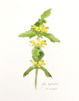 Annette Fienieg: Yellow Deadnettle, 21-4-2021