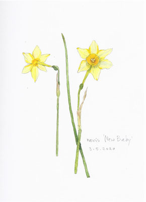 Annette Fienieg: Narcis 'New Baby'