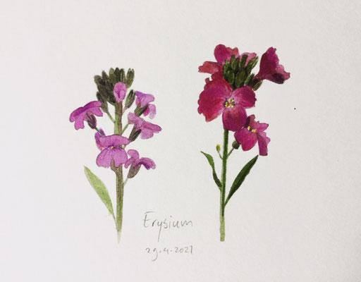 Annette Fienieg: Erysium, 29-4-2021