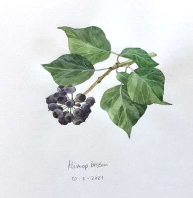 10-2-2021; Klimop bessen, Annette Fienieg