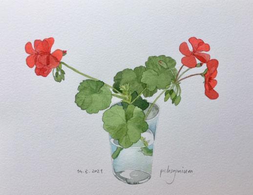 Annette Fienieg: Pelargonium; 14-5-2021