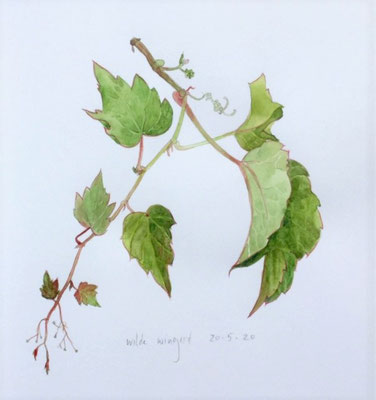Annette Fienieg: Boston ivy