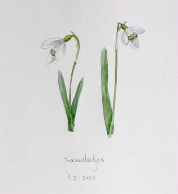 Annette Fienieg: Snowdrops, 1-2-2021