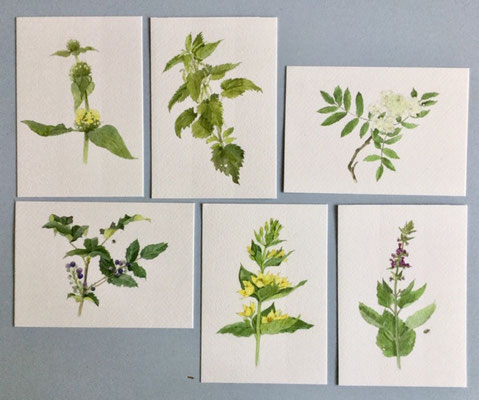 set 1, tuinplanten