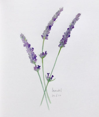 Annette Fienieg: Lavendel