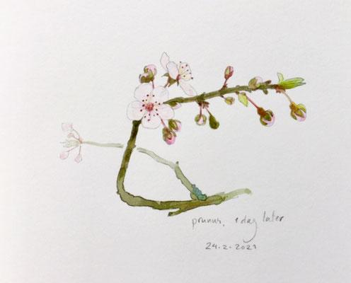 24-2-2021; Annette Fienieg: Prunus, 1 day later