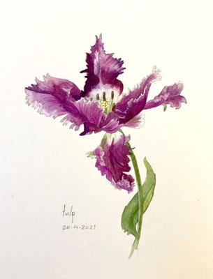 Annette Fienieg: Tulip, 20-4-2021