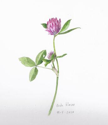 Annette Fienieg: Red clover